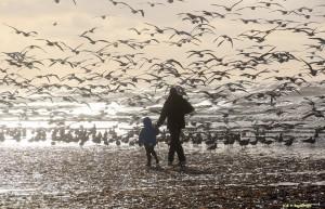 ijmuiden strand meeuwen